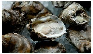 eatalabamaseafood.com oysters