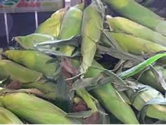 pile of silver queen corn