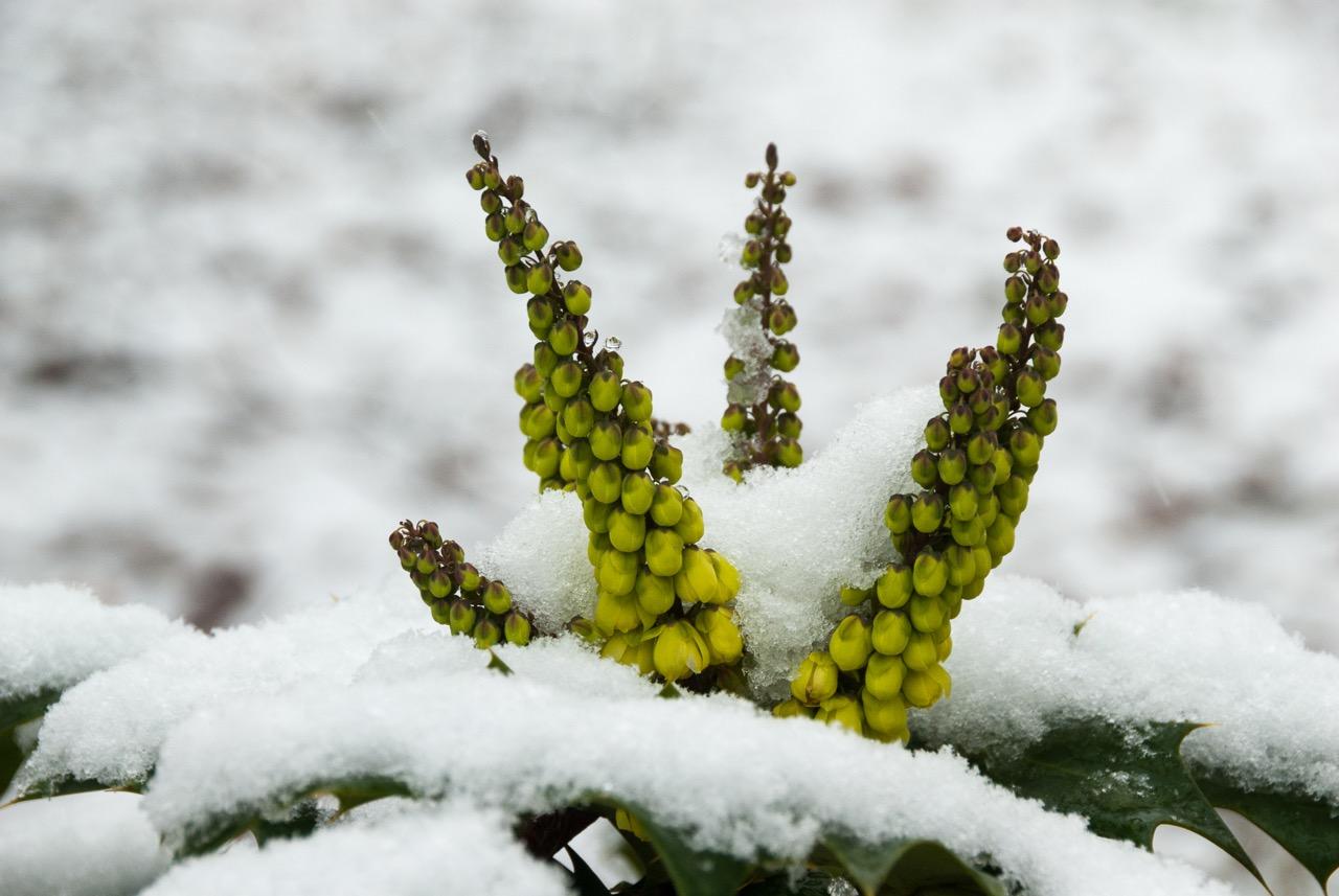 sally-smith-scilla-and-snow