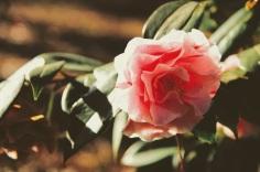 camellia 3 jeremy