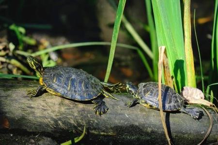 turtle jeremy 2