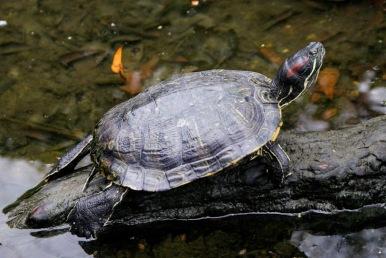 turtle jeremy 3