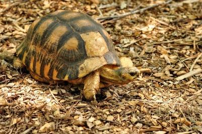 turtle jeremy 4